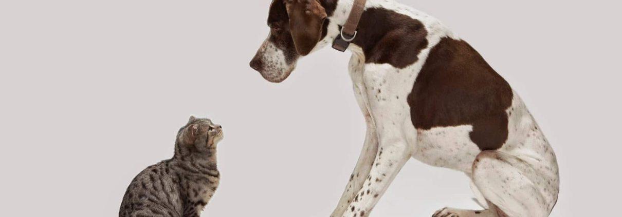 sterilizzazione cane e gatto