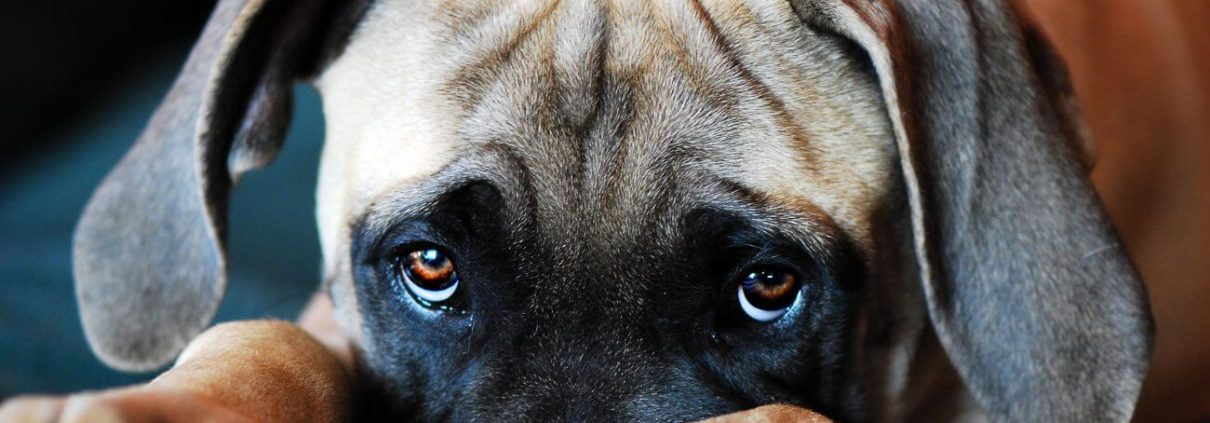 adottare-un-cucciolo