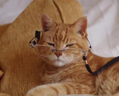 terapie-gatti-anziani