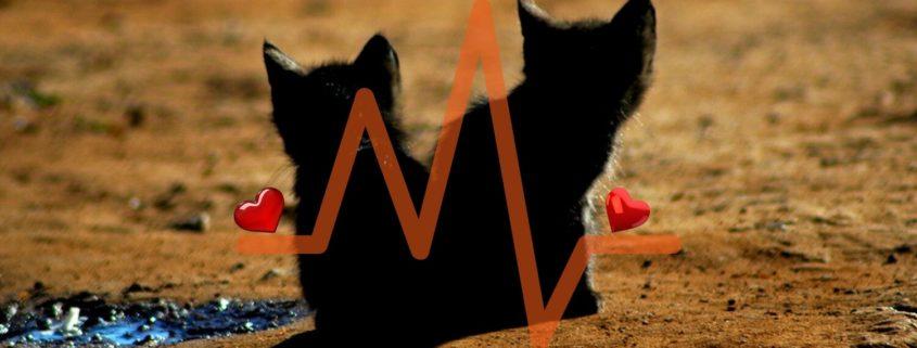 cardiopatia gatto sintomi