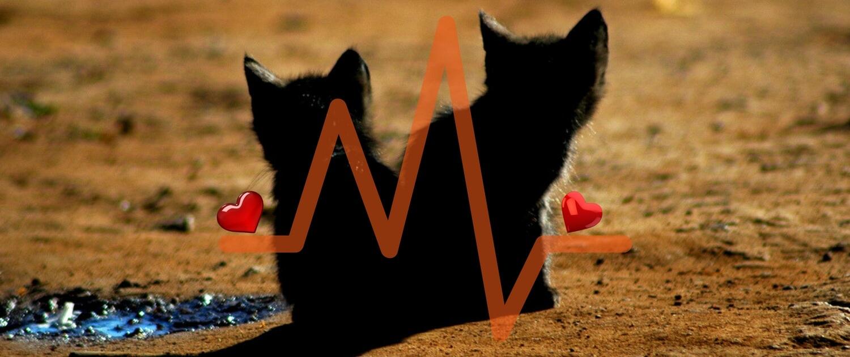 E se il gatto avesse problemi di cuore? Ecco i 10 sintomi da conoscere