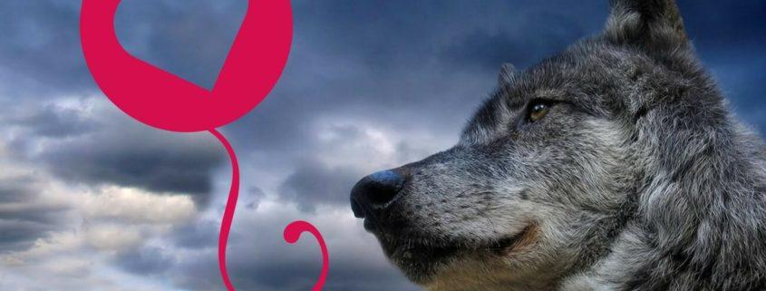 malattie cardiache nel cane sintomi