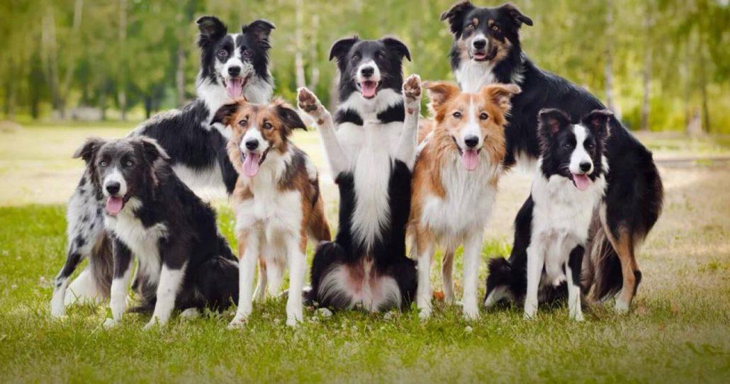 prevenzione parassiti cane border
