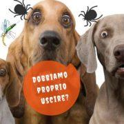 prevenzione parassiti cani e gatti