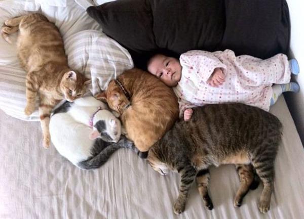vermi intestinali nei cani e gatti