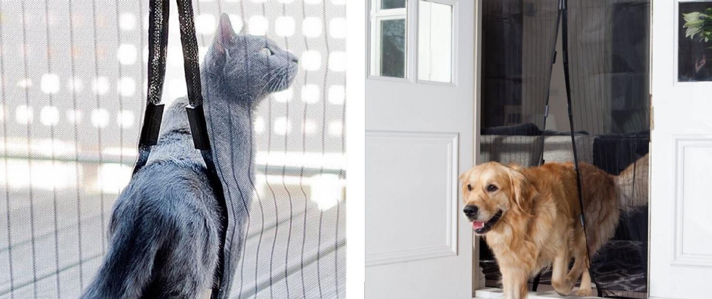Filariosi cardiopolmonare nel cane: sai davvero cos'è?