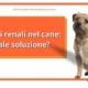 calcoli renali nel cane