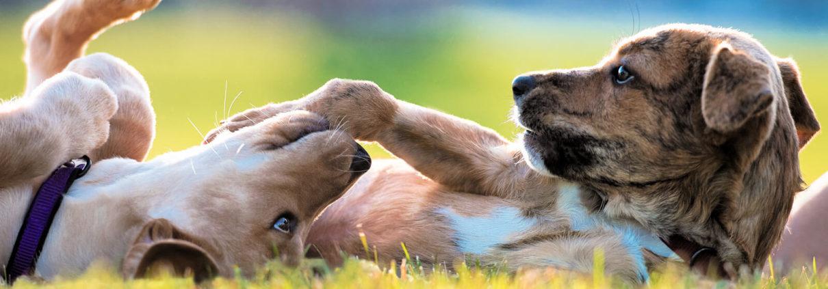 comunicare con un cucciolo