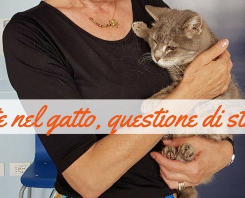 cistite nel gatto e stress