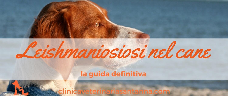 Leishmaniosi nel cane 2 clinicaveterinariasantanna for Pastiglie filaria cani