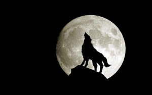 epilessia nel cane fasi lunari
