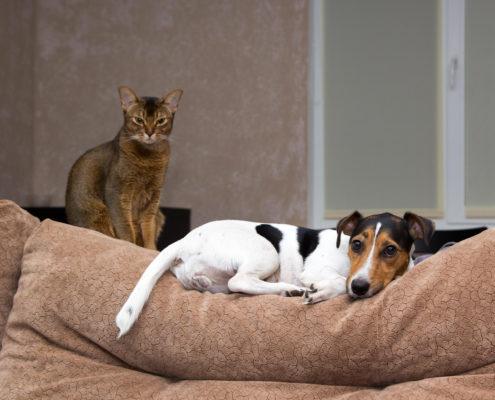 epilessia nel gatto2
