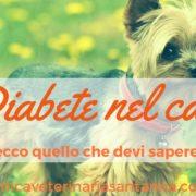 diabete nel cane yorkie