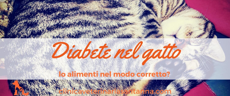 Diabete Nel Gatto Eccoti Una Guida Completa Sulla Sua Gestione