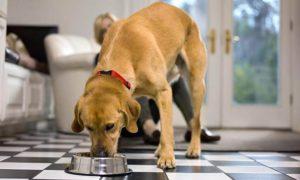 nsufficienza renale cane anziano (1)