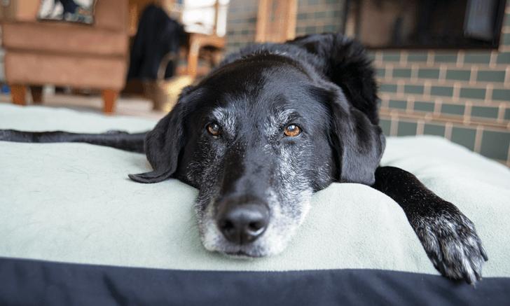 insufficienza renale cane non mangia (1)