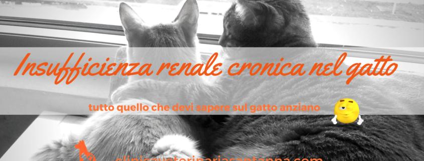 insufficienza renale cronica nel gatto anziano
