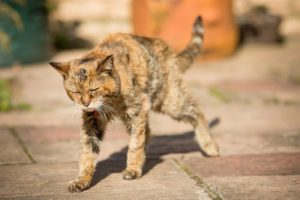Insufficienza Renale Gatto Anziano Sottopeso Ecco Come Gestirlo