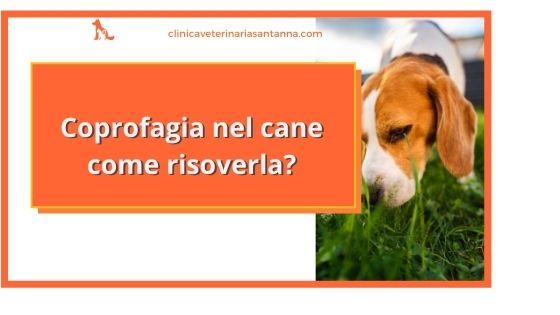 Coprofagia nel cane come risolverla
