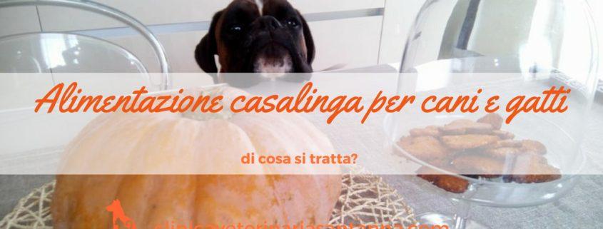 alimentazione casalinga del cane e gatto