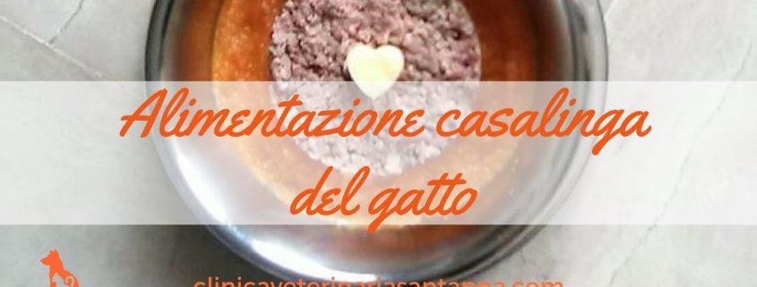 Alimentazione casalinga del gatto fb (1)