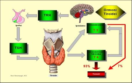 Tiroide - Ormoni tiroidei