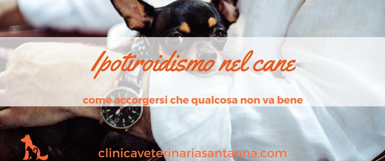 Ipotiroidismo nel cane: ecco 3 cose che devi sapere