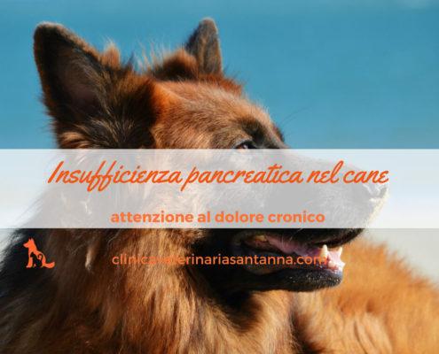 vìinsufficienza pancreatica nel cane