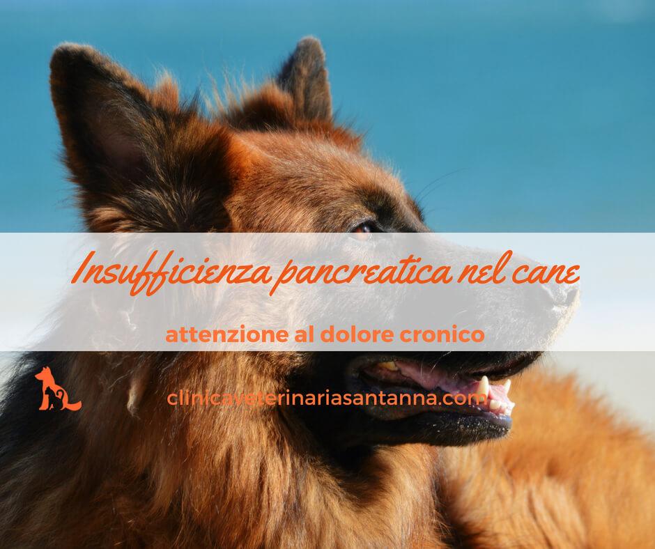 Insufficienza pancreatica nel cane: ecco cosa devi sapere