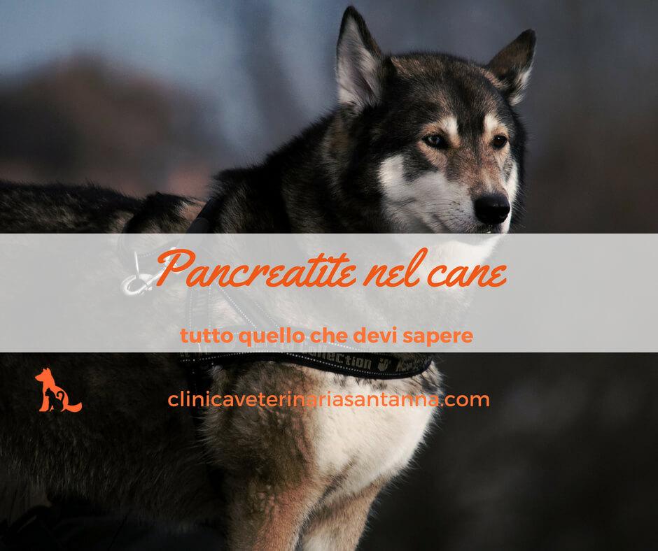 Pancreatite nel cane: i segreti di una malattia grave