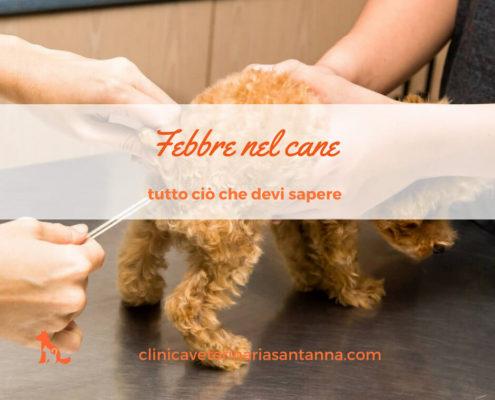 febbre nel cane temperatura
