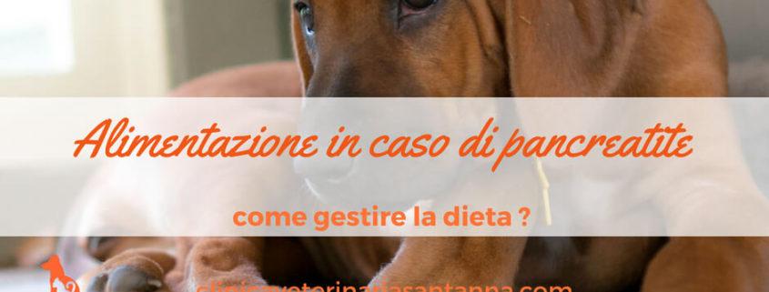 insufficienza pancreatica dieta cane