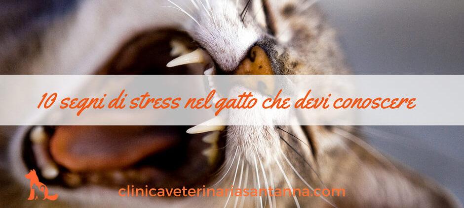 10 segni di stress nel gatto fb