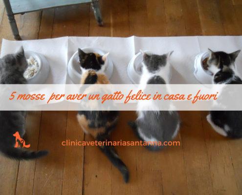 5 mosse per avere un gatto felice