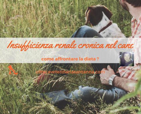 insufficienza renale cronica nel cane la dieta
