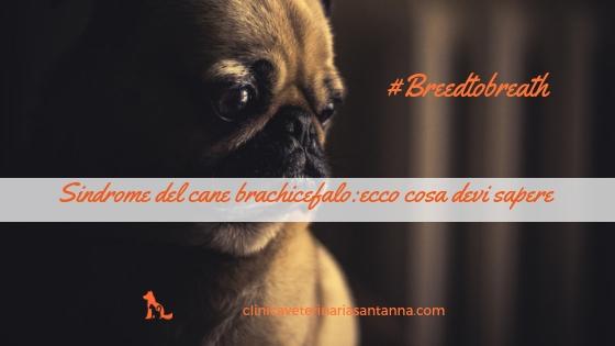 Problemi dei cani brachicefali: ecco il segreto per farli stare meglio.