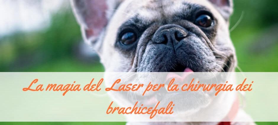 laser per chirurgia dei brachicefali
