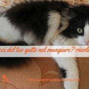 capricci nel cibo gatto fb