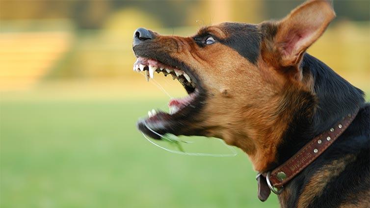 castrazione del cane perché aggressivo