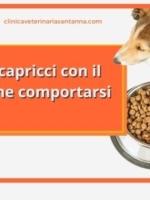 Il mio cane fa i capricci: devo (ancora) cambiare cibo?
