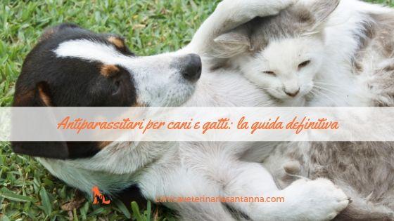 Prevenzione Parassiti Nel Cane E Gatto Ecco La Guida Definitiva