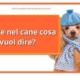 febbre nel cane come interpretarla