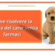 diarrea cane risolverla senza farmaci