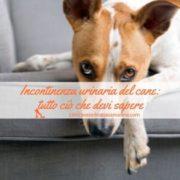 incontinenza urinaria cane