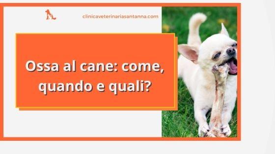 Ossa al cane: quali, come e quando posso darle?