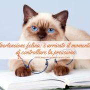 ipertensione nel gatto