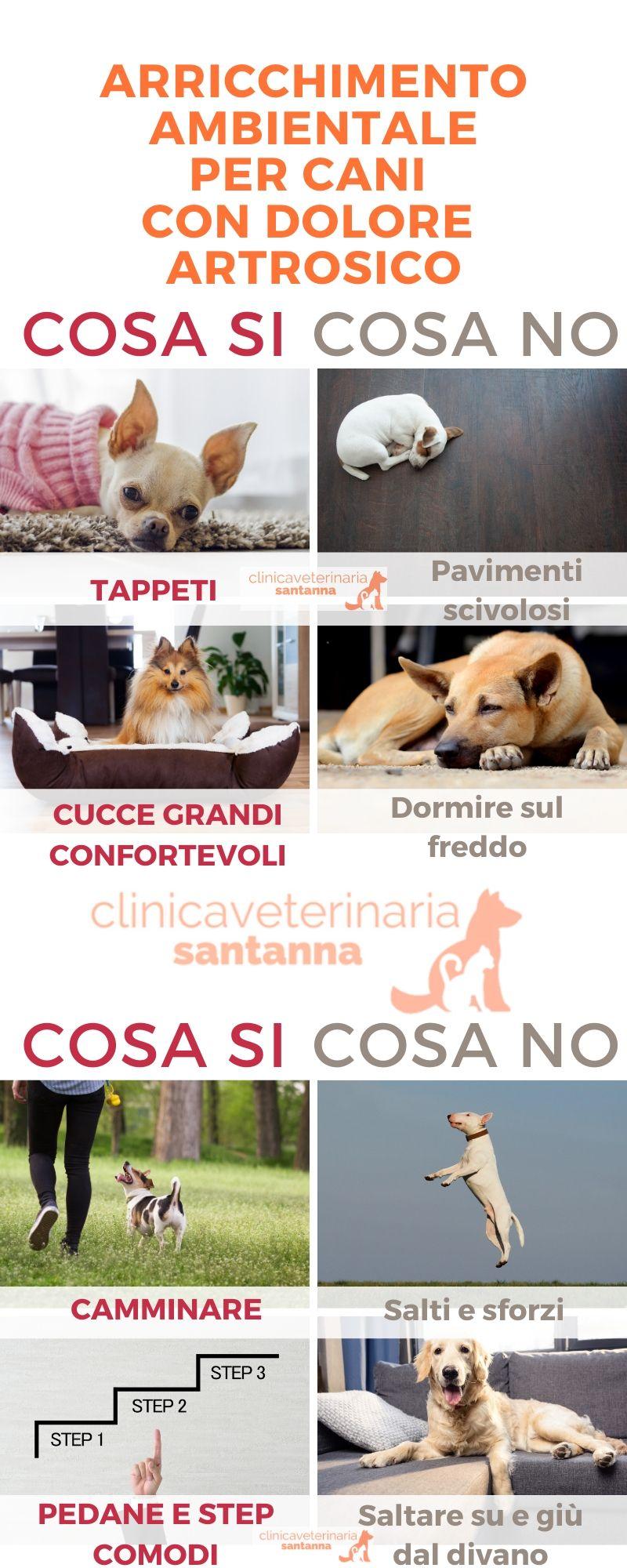 Arricchimento ambientale per cani con dolore artrosico