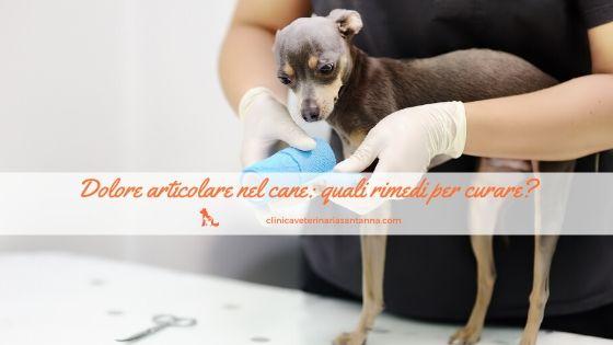 Dolore articolare nel cane rimedi