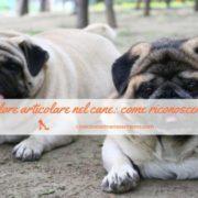infezione alla prostata canes