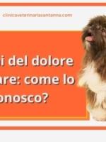 Come riconoscere il dolore articolare nel cane?